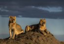 Remembering Wildlife: Wildlife Photographers Team Up to Save Endangered Animals