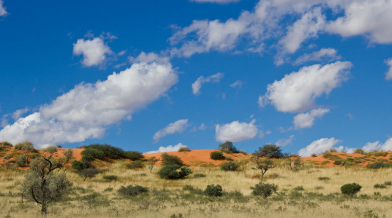 Guide to the Kgalagadi Transfrontier Park