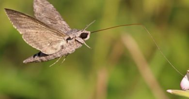 New Study Gives a More Complex Picture of Insect Declines