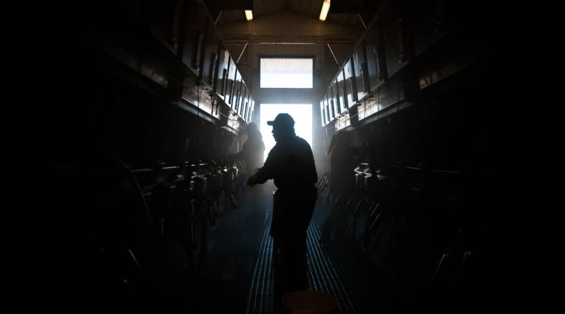 Why Farmers Are Dumping Milk, Even as People Go Hungry