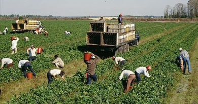 U.S. agriculture: Can it handle coronavirus, labor shortages and panic buying?