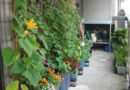 9 Patio Garden Ideas – How to Grow Plants on a Small Patio | Apartment Therapy