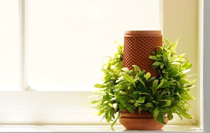 Unique terraplanter plant growing system raises more than $3.2 million on Kickstarter